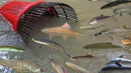 漂亮的农村女孩用篮子塑料瓶捕捉了很多鱼