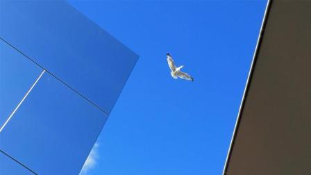 手机荷兰风光视频大片《旅程》 , 你也可以拍!