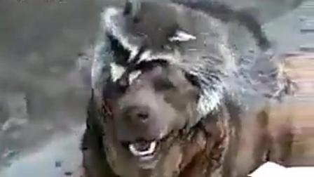 动物带给我们的超搞笑视频集合