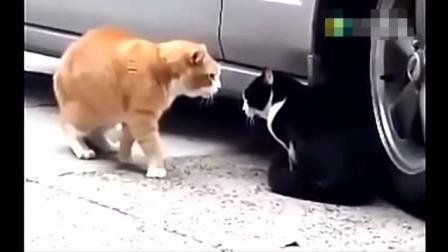 动物精选搞笑视频