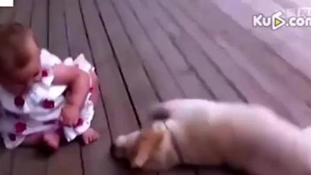 动物搞笑视频 儿童与动物搞笑幽默汇编