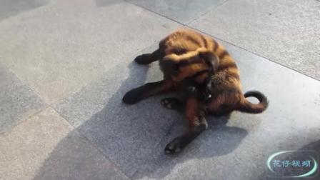 动物被玩坏配音搞笑狗狗 汪星人魔性劲舞治愈