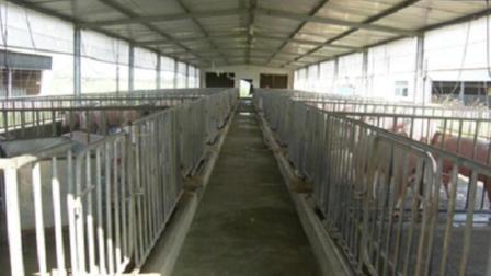 敞开式猪舍 钢架结构成本低建设快