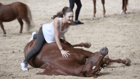 世界名马与美女魔性鬼畜, 太搞笑了!