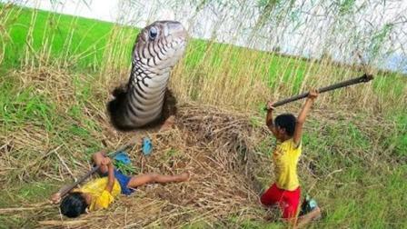 农村小女孩看见草丛里有异动, 挖开一看, 惊讶了