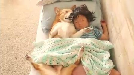 狗狗非要和小主人一起睡, 这姿势亮了!