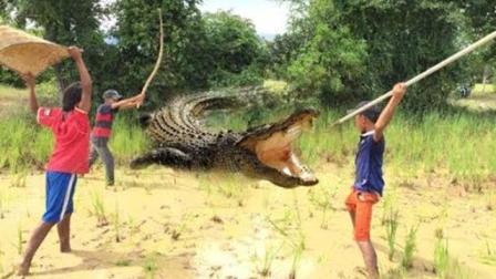 三个勇敢的男孩捕鱼时抓鳄鱼, 一旁的群众都惊愕了!