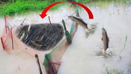 农村男孩这样的渔网捕鱼, 也能捕到鱼, 网友直接惊讶了