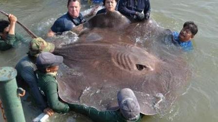农村渔民打捞, 竟遇上一只巨货, 水面炸开锅了