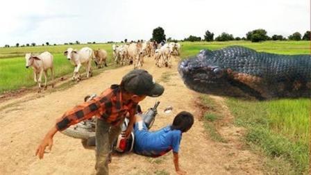 柬埔寨这些熊孩子一出动, 大蟒蛇又该哭了!