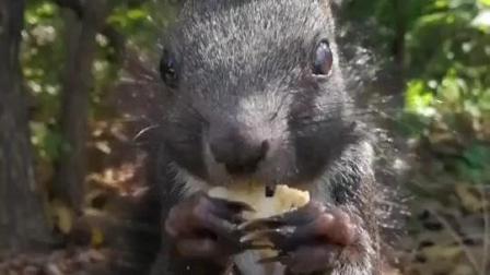 小松鼠: 眼睛发炎了刚点完眼药水, 我不想吃饼干饿的太快了