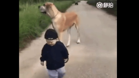 宝宝, 你这别是牵了匹马出来吧?