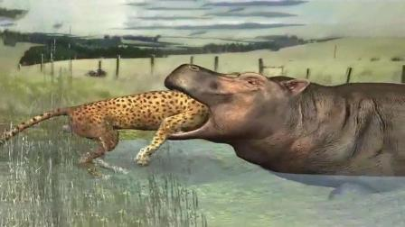 河马能吃猎豹? 动画还原过程, 有谁知道会不会发生这样的事