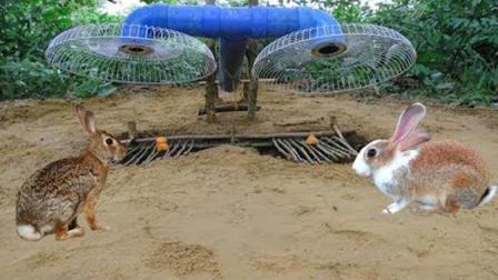 农村娃子自制陷阱野外抓兔子, 放几片胡萝卜兔子自己往里跳