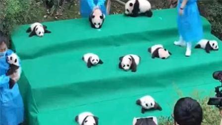封面资讯 2017 9月 2017新生大熊猫集体亮相 为祖国庆生