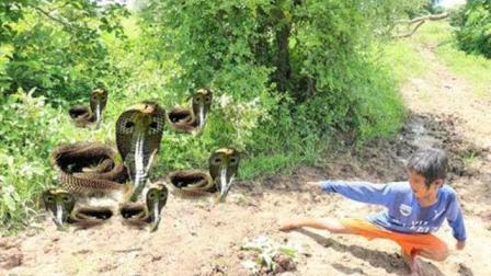 农村的孩子还真是会玩, 野外设个陷阱抓了一口袋的蛇