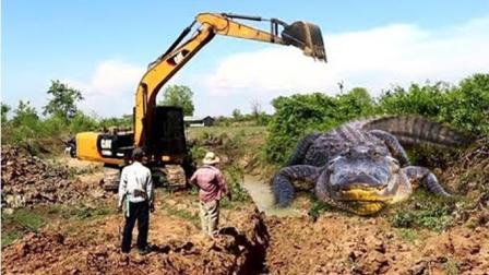 实拍: 农村男孩郊外泥潭里摸到鳄鱼受惊的场面, 太可怕了!