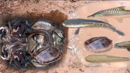 有创意的农村女孩做深洞陷阱捕捉很多鱼和乌龟
