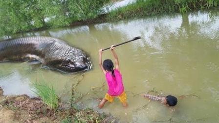 柬埔寨小女孩抓大蟒蛇一夜爆红, 月收入超我们10000
