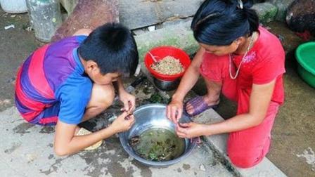 你敢吃蟋蟀吗? 农村妇女这样煮蟋蟀, 一群孩子抢着吃