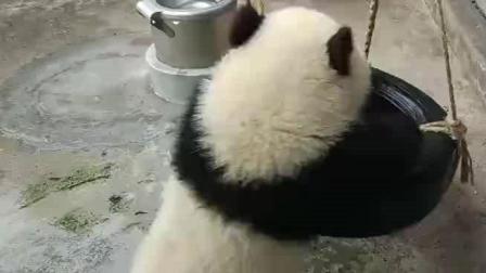 熊猫这白莹莹, 圆滚滚的小屁屁, 实在诱人犯罪啊!