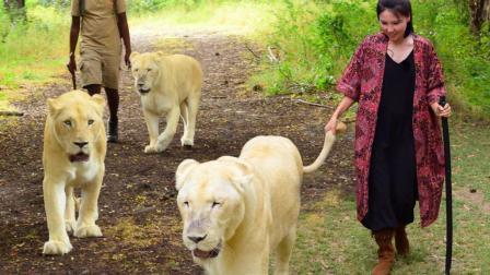 国庆亲子游必去圣地 美女在非洲拉着狮子尾巴逛动物园 97