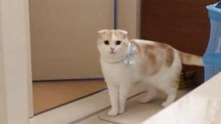 vine平台最搞笑的动物短视频