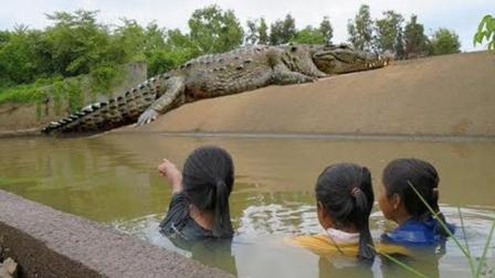 女孩去放鱼笼, 半路杀出一条大鳄鱼, 结果她这样做, 大家直接点赞