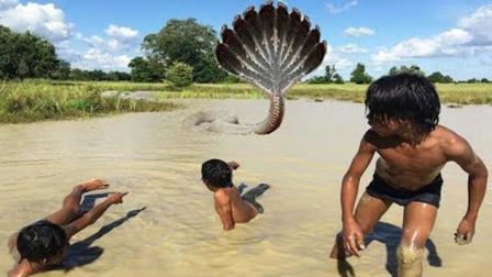 这几个毛孩胆子大得不得了, 徒走跑河里抓大蟒蛇, 结果悲剧呀!