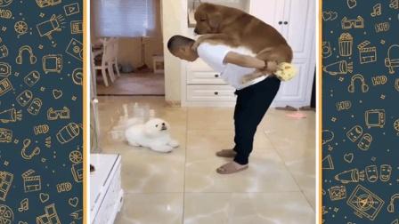 人与动物!