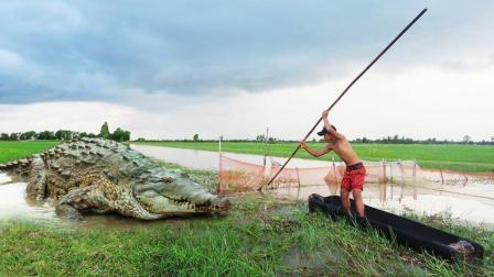 农村小伙划船去收鱼笼, 不料河对岸杀出一条鳄鱼, 结果悲剧了