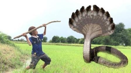 两个农村男孩去郊外搞野, 半路杀出一条毒蛇, 太可怕了!