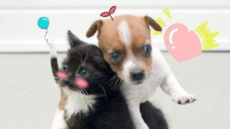 萌宠Show: 你们这些单身狗宠物都开始秀恩爱了你们还是单着10