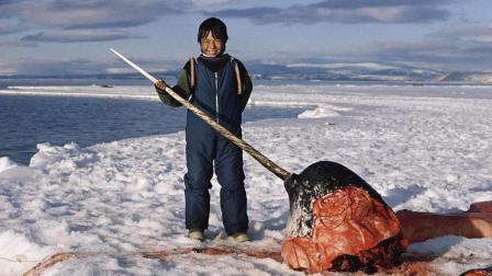 半岛奇闻 生活在北极圈的爱斯基摩人 喜欢生吃鲸肉 一个辣椒要卖14美元