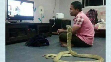 泰国的一名男子竟然娶了一条长3米的蛇为妻! ! !