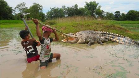 两个柬埔寨男孩去水田抓螃蟹, 不料水面浮出一条大鳄鱼, 太可怕了
