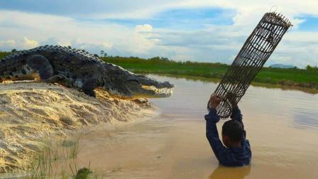 鳄鱼再凶猛, 遇上柬埔寨这些熊孩子, 结局比大蟒蛇还悲惨