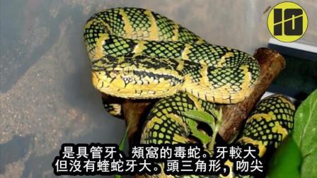 世界上排名前十位最毒的蛇 眼镜蛇只能排在第六位
