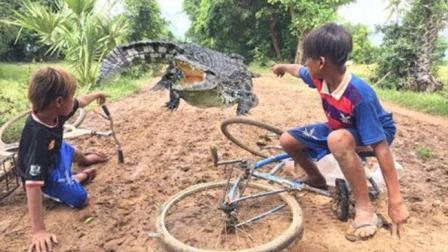 这两个娃仔不得了, 抓鳄鱼如同我们抓壁虎, 还玩得如此开心!