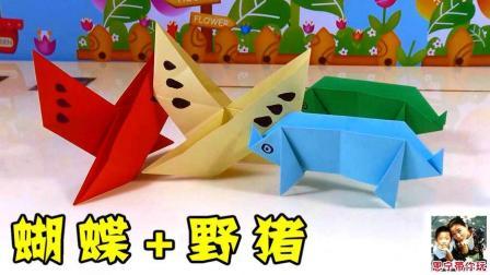 野猪 蝴蝶 17