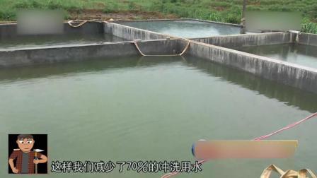 农村规模养猪不怕查环保 猪舍用水减7成 几十万的建设成本高吗