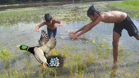 两兄弟郊外游泳时发现一只野鸭在下蛋, 哥俩往前一扑, 悲剧啊!