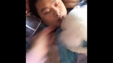 妹子趁着老公睡觉 跟狗狗一起恶搞老公 太逗了