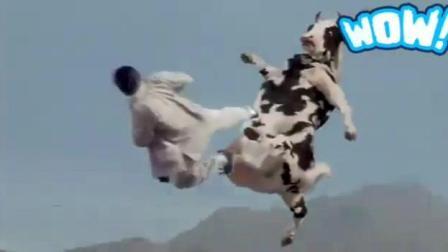 这不是一头普通奶牛, 这应该是得到李小龙真传的功夫奶牛