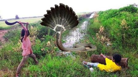 2个农村孩子用鱼笼捕鱼, 却遇到这种可怕的生物!