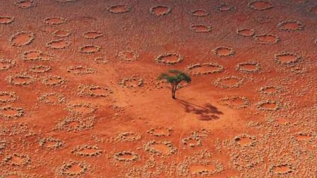 非洲神秘怪圈并非白蚁所为 科学家研究成果解释