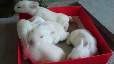 萌宠教程: 想必大家都知道兔子可爱, 今天来看看兔子是怎么长大的