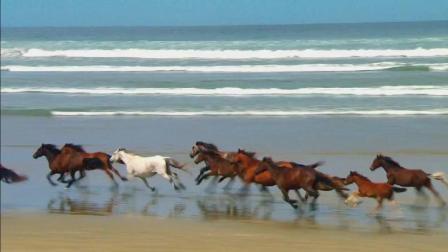 高清大自然视频素材, 有海、马群、海狮等