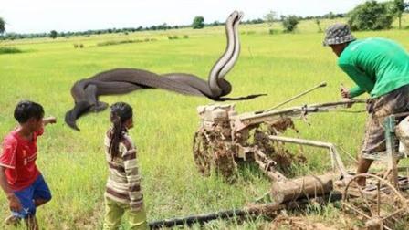 悲剧啊! 如此凶猛的大蟒蛇竟成了农村娃戏耍的对象