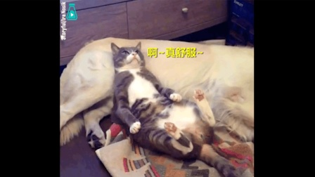 喵主子正舒服躺着思考猫生, 突然发现枕头有点不对劲